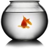goldfish girl