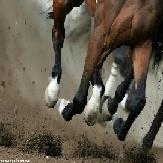 horses-1-1-1