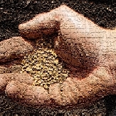 Mustard Seed-1-1-1