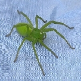 the green spider-1-1-1